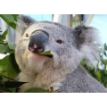 Taronga Zoo May Coupon - 2 Adult Tickets for $23 each (Price of Child's Ticket)! Ends 29 May