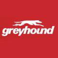 Grey Hound promo codes